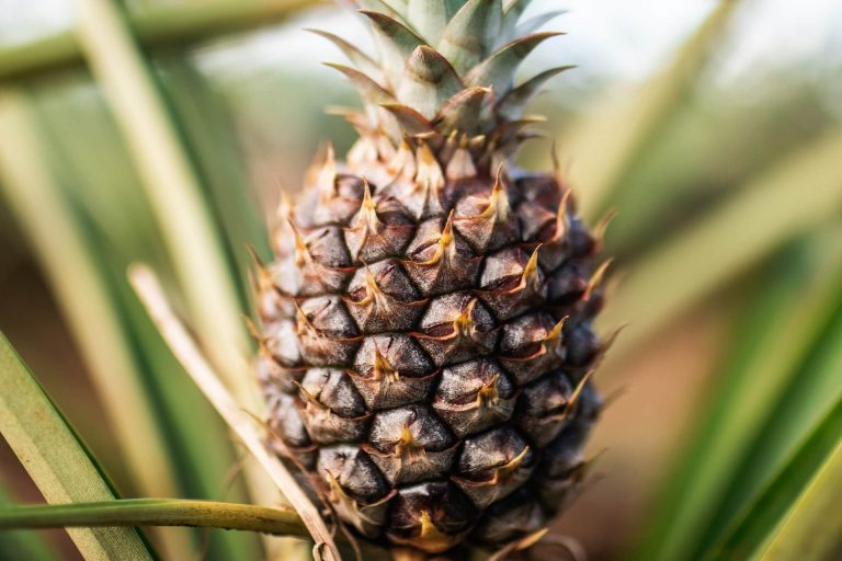 China's ban on Taiwanese pineapples sours sentiment towards Beijing