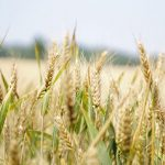 Australia seeks WTO mediation on China barley tariffs