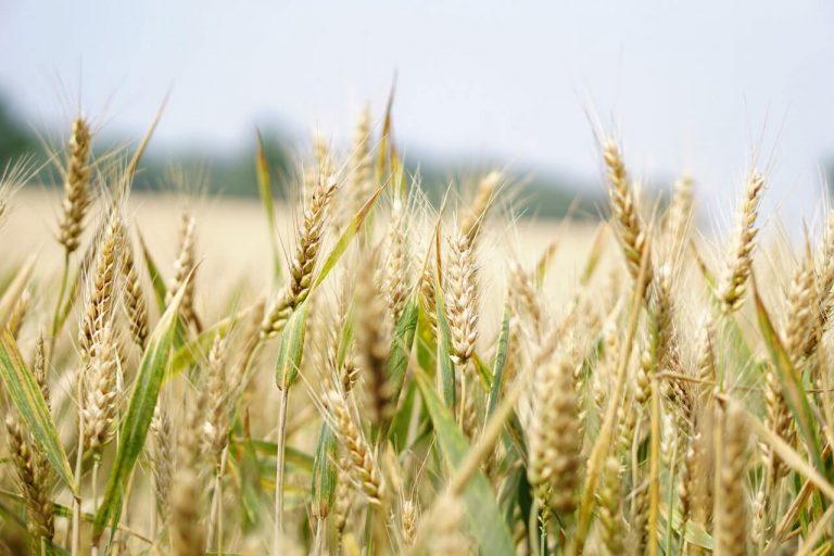Australia seeks WTO mediation on China barley tariffs